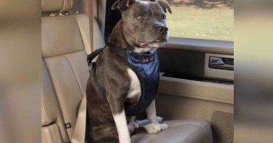 20190101 brown2 Viajar con mascotas en el auto