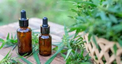 Más de siete mil inscriptos en primer encuentro de la Diplomatura en Cannabis Medicinal en la UNAJ