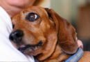 Piden que la legislación contemple a los animales como sujetos de derecho